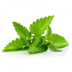 peppermint for gingivitis