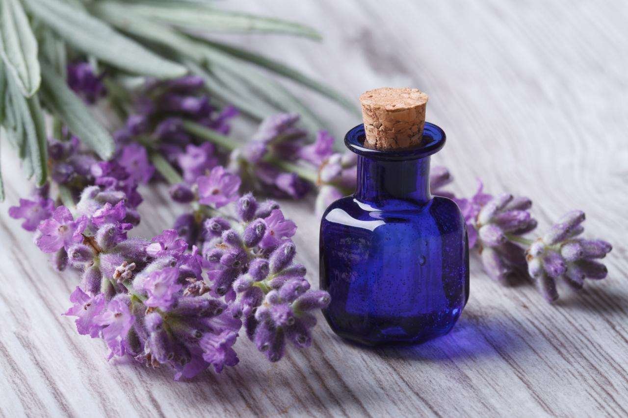 Lavender oil is widely used in meditation and therapy due to its calming properties. and gentle soothing scent.